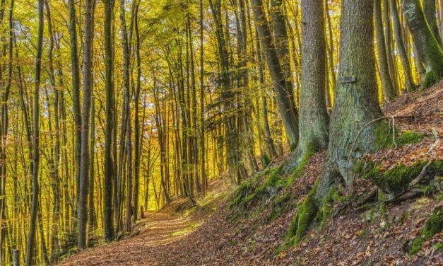 ITALIA SEMPRE PIÙ VERDE, AUMENTANO BOSCHI E FORESTE MA ANCHE GLI INCENDI